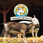 redwood hill creamery